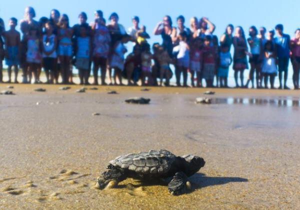 Após 30 anos, tartarugas marinhas voltam a desovar na praia de Itapuã